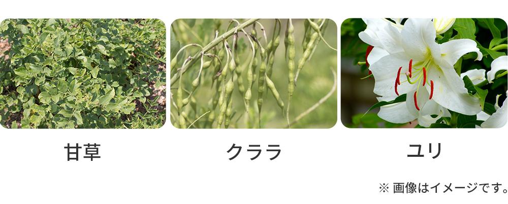 ホワイトメラパーフェクト エッセンス_甘草・クララ・ユリ