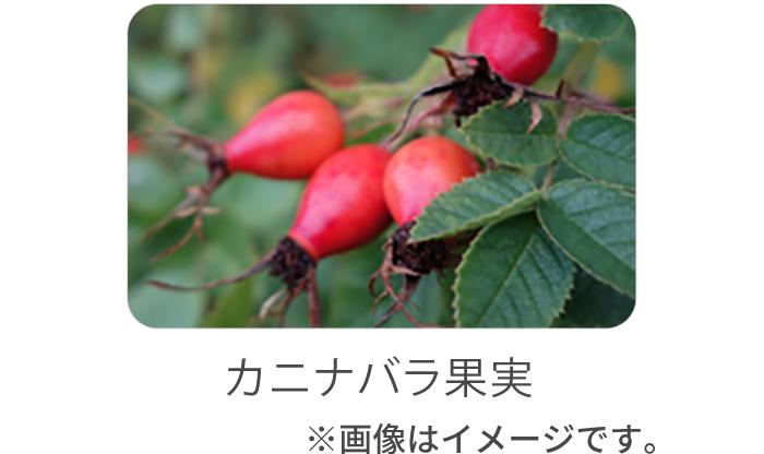 カニナバラ果実