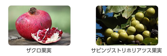 ザクロ果実、サピンズストリホリアツス果実のイメージ写真