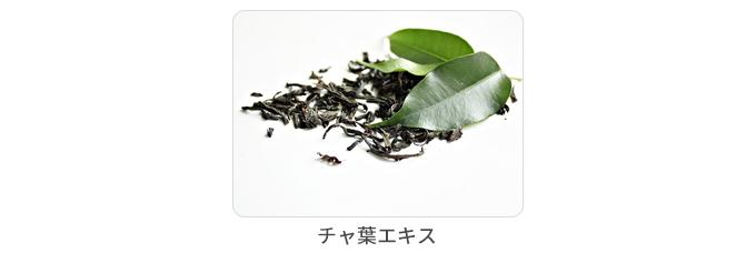 茶葉エキス
