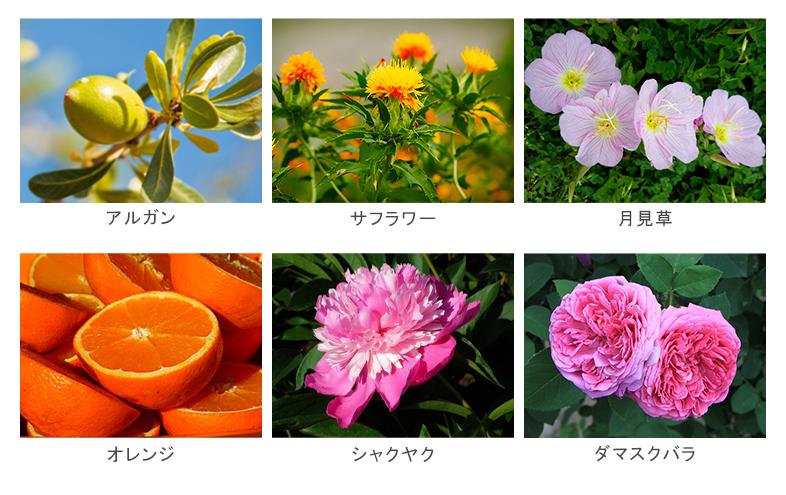 ブルーミングフローラ シルキーヘアオイル 植物オイルイメージ図